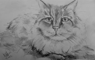 John Street Animal Hospital Resident Cat