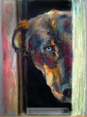 Farm Dog Stare